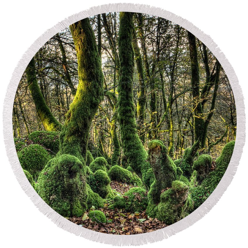 Forest Round Beach Towel featuring the photograph The Mossy Creatures Of The Old Beech Forest 1 by Weston Westmoreland