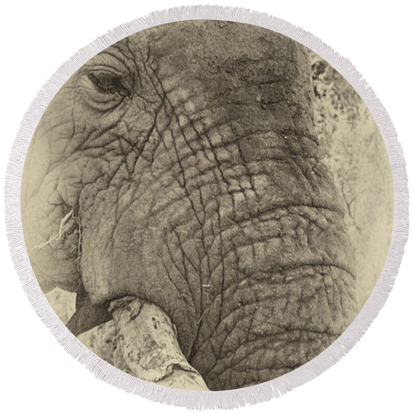Old Round Beach Towel featuring the photograph The Old Elephant Bull by Douglas Barnard