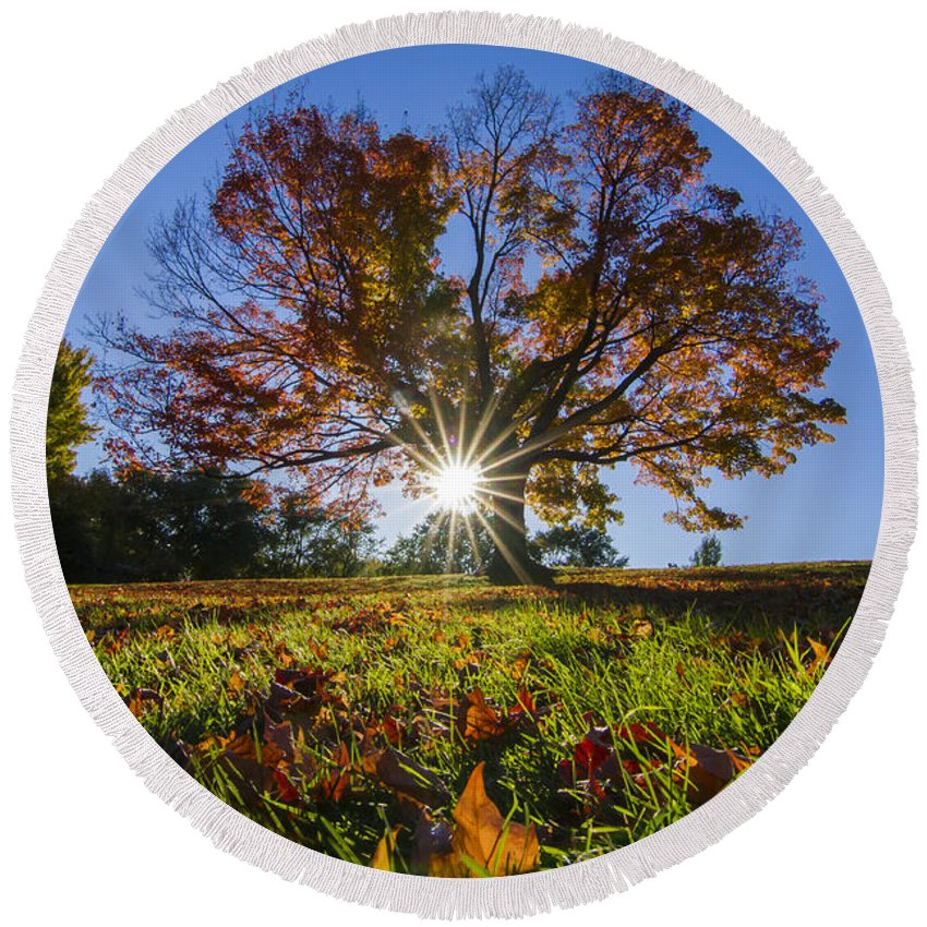 Autumn Round Beach Towel featuring the photograph The Old Maple by Mircea Costina Photography