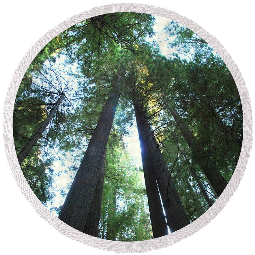 Redwoods Round Beach Towel featuring the photograph The Redwood Giants by Kathy Sampson