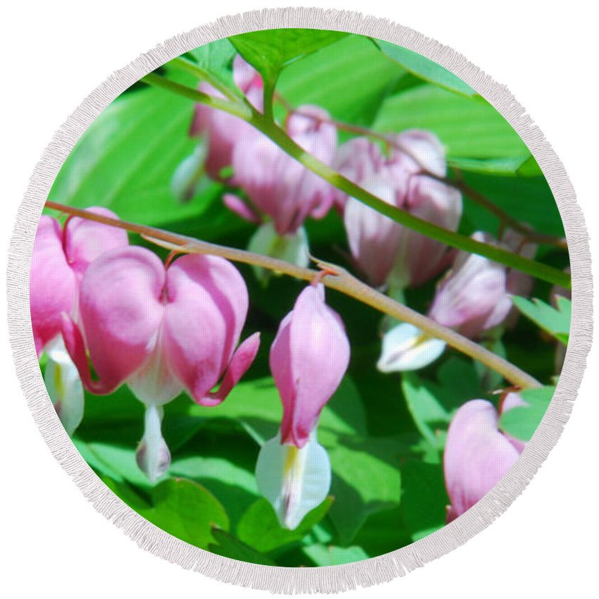Bleeding Heart Flowers Round Beach Towel featuring the photograph The Romance Flower by Optical Playground By MP Ray