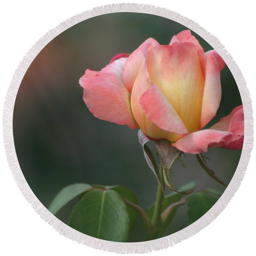 Rose Round Beach Towel featuring the photograph The Rose by Living Color Photography Lorraine Lynch