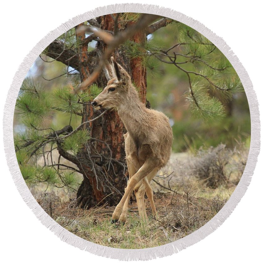 Rocky Mountain National Park Round Beach Towel featuring the photograph The Rudolph Dance by Adam Jewell