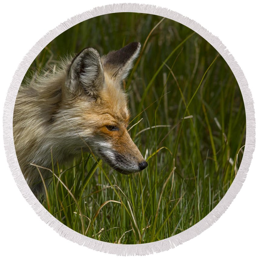 Fox Round Beach Towel featuring the photograph The Sneek by Jeff Shumaker