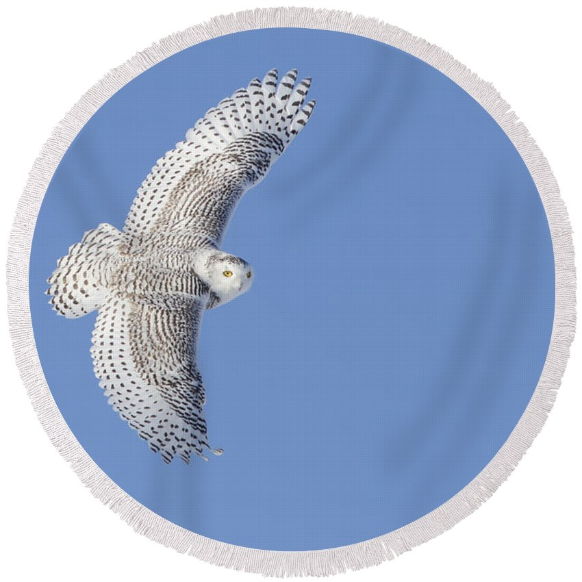 Angel Round Beach Towel featuring the photograph The Snowy Hunter by Mircea Costina Photography