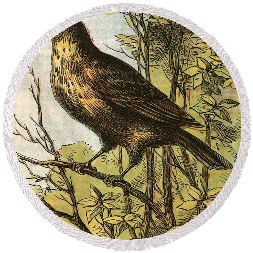 Thrush Round Beach Towel featuring the painting The Thrush by English School