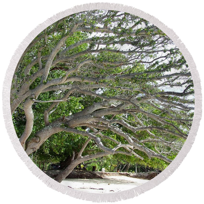 Big Tree Round Beach Towel featuring the photograph The Tree by Andrea Anderegg