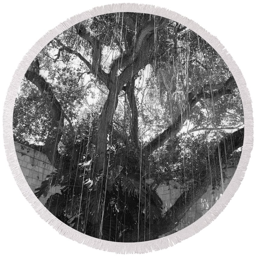 Black And White Round Beach Towel featuring the photograph The Tree Vines by Rob Hans