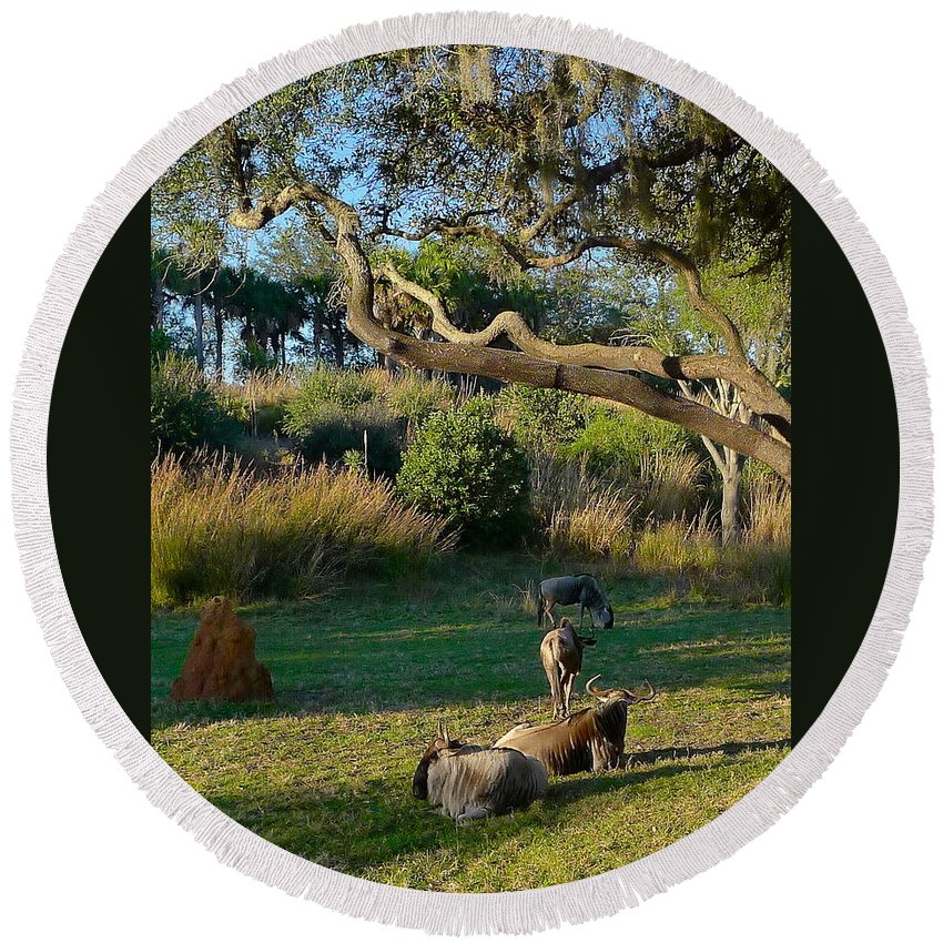 Animal Round Beach Towel featuring the photograph The Wildebeest by Denise Mazzocco