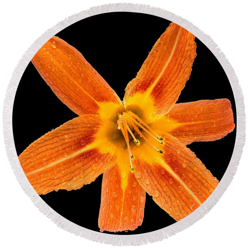 Flower Round Beach Towel featuring the photograph This Orange Lily by Steve Gadomski