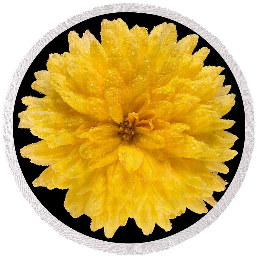 Flower Round Beach Towel featuring the photograph This Yellow Chrysanthemum by Steve Gadomski