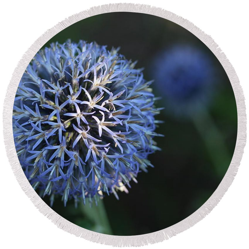 Thistle Round Beach Towel featuring the photograph Thistle Bloom 2 by Kenny Glotfelty