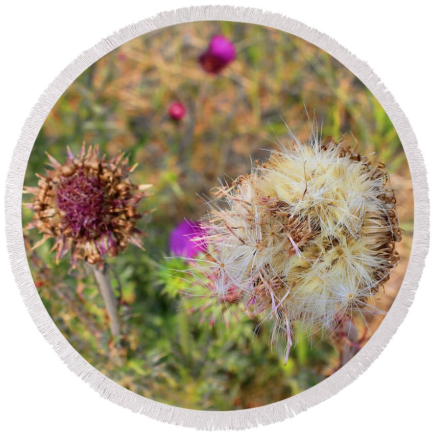Round Beach Towel featuring the photograph Thistles by Cathy Anderson