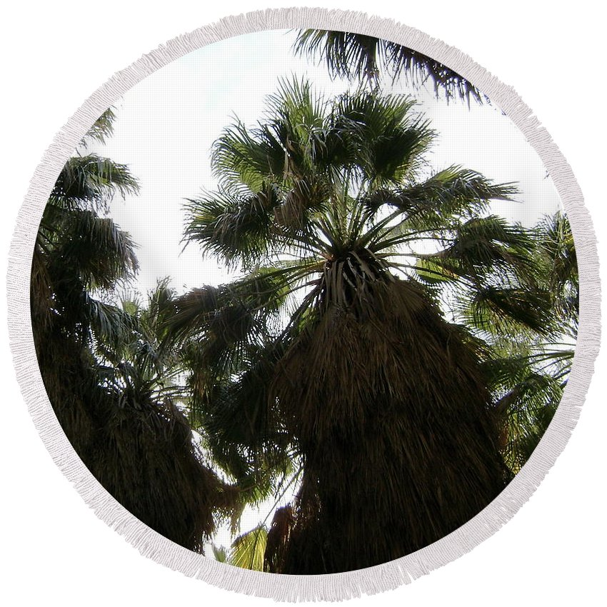 Palm Tree Round Beach Towel featuring the photograph Thousand Palms Canyon by Gerry High