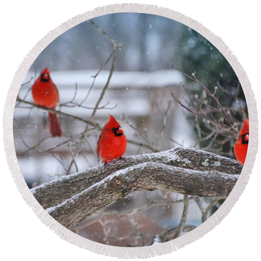 Cardinal Round Beach Towel featuring the digital art Three Amigos by Anita Hubbard