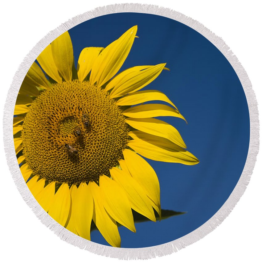 3scape Photos Round Beach Towel featuring the photograph Three Bees And A Sunflower by Adam Romanowicz