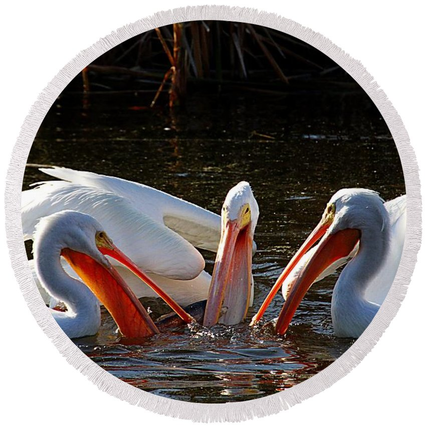 Pelicans Round Beach Towel featuring the photograph Three Pelicans And A Fish by Elizabeth Winter