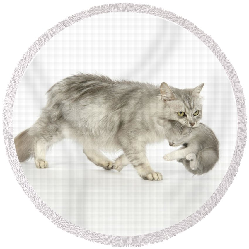 Cat Round Beach Towel featuring the photograph Tiffanie Cat And Kitten by John Daniels