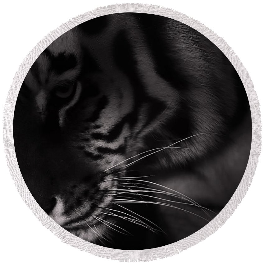 Tiger Round Beach Towel featuring the photograph Tiger Monochrome by Martin Newman