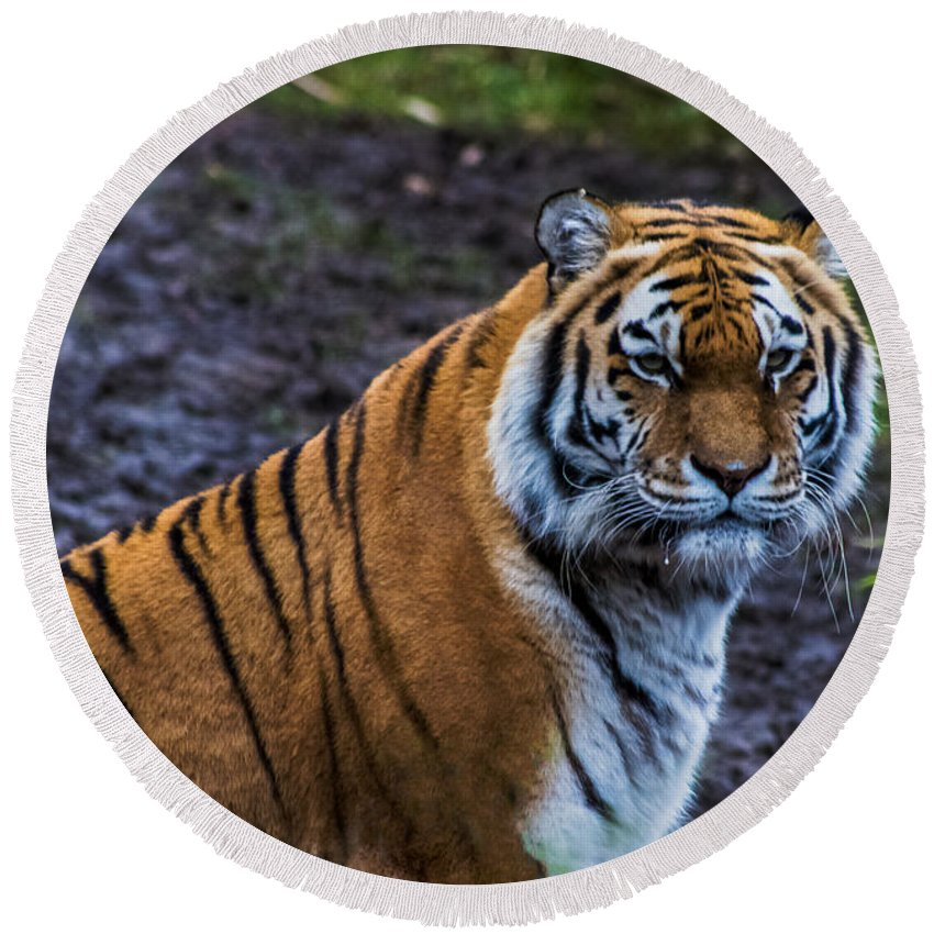 Tiger Round Beach Towel featuring the photograph Tiger Portrait by Martin Newman