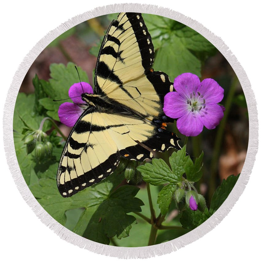 Tiger Swallowtail Butterfly On Geranium Round Beach Towel featuring the photograph Tiger Swallowtail Butterfly On Geranium by Daniel Reed