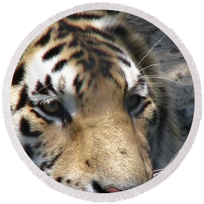 Patzer Round Beach Towel featuring the photograph Tiger Water by Greg Patzer