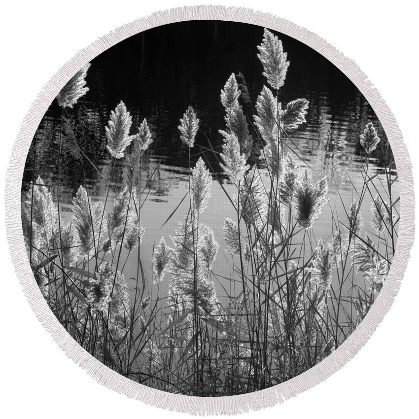 Pampas Grass Round Beach Towel featuring the photograph Till Next Year by Ann Horn