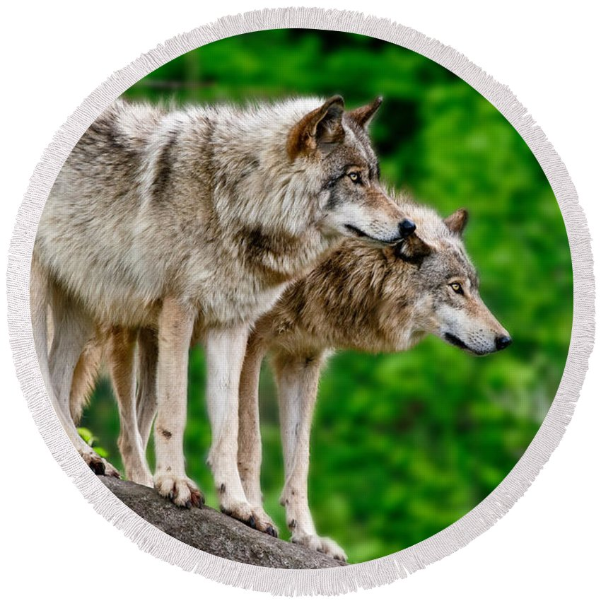 Timber Wolf Round Beach Towel featuring the photograph Timber Wolf Pictures 191 by Wolves Only