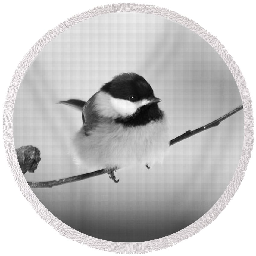 Bird Round Beach Towel featuring the photograph Tiny Branch With Guest by Deborah Benoit