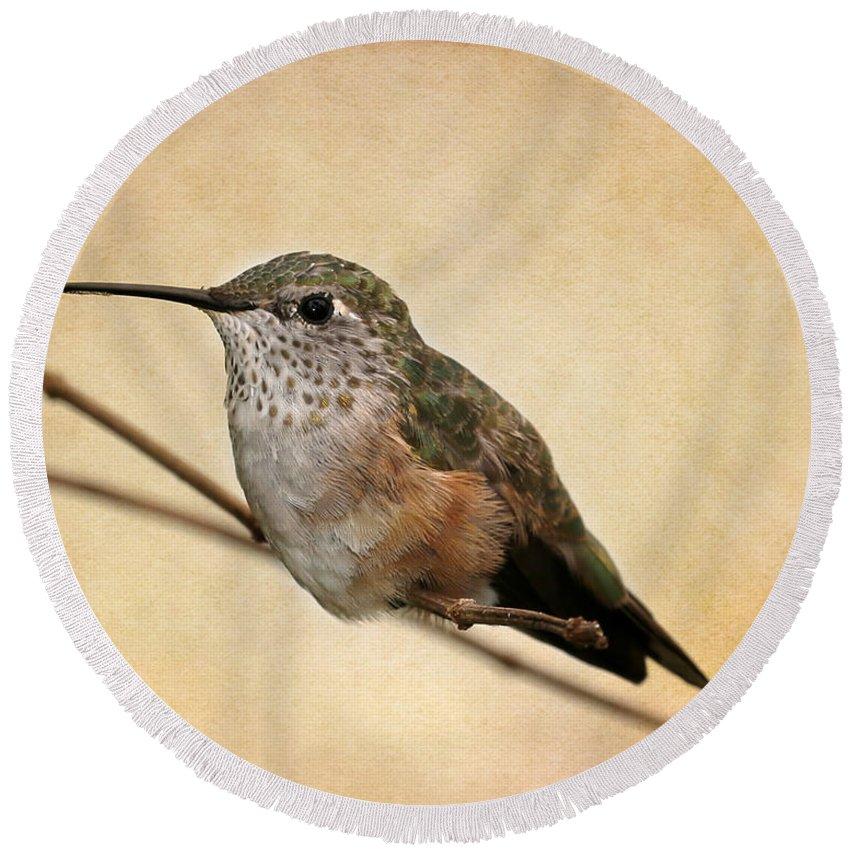 Winter Round Beach Towel featuring the photograph Tiny Hummingbird Resting by Sabrina L Ryan