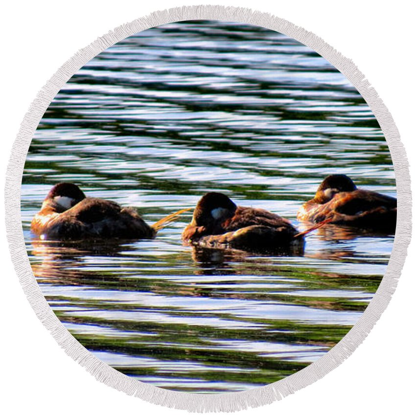 Ducks Round Beach Towel featuring the photograph Tired Trio by Art Dingo