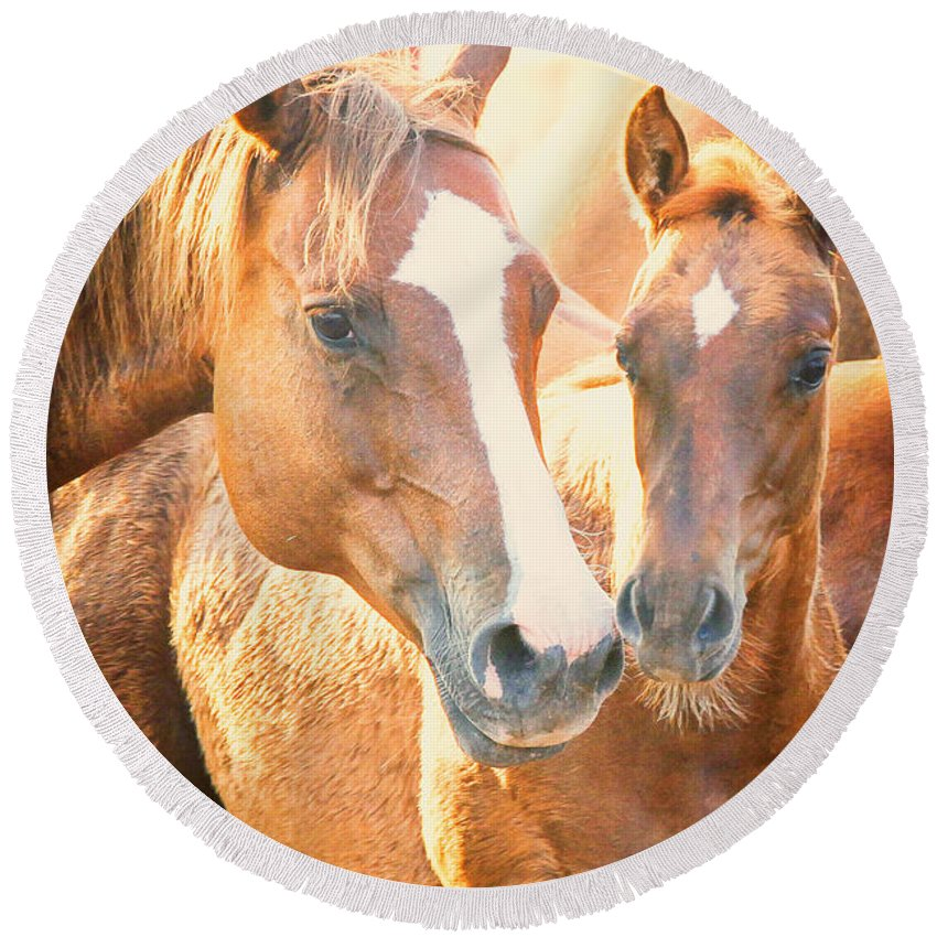 Horse Round Beach Towel featuring the photograph TLC by Kelli Brown