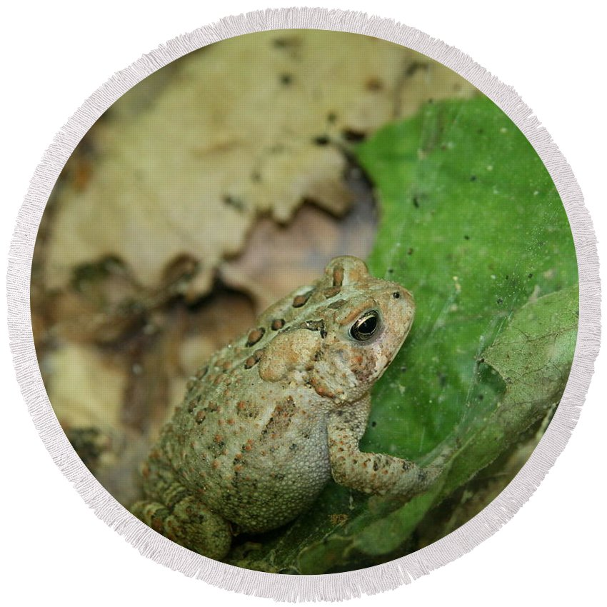 Toad Round Beach Towel featuring the photograph Toad Under Cover by Neal Eslinger