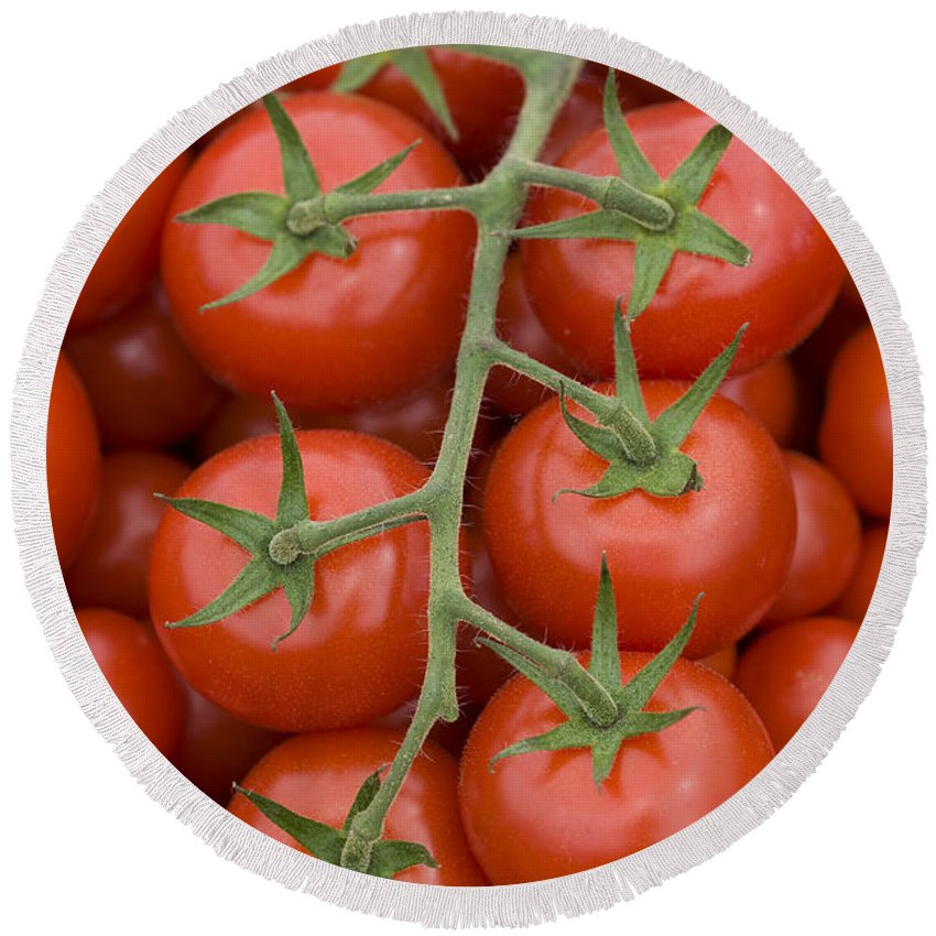 Tomato Round Beach Towel featuring the photograph Tomato On The Vine by Lee Avison