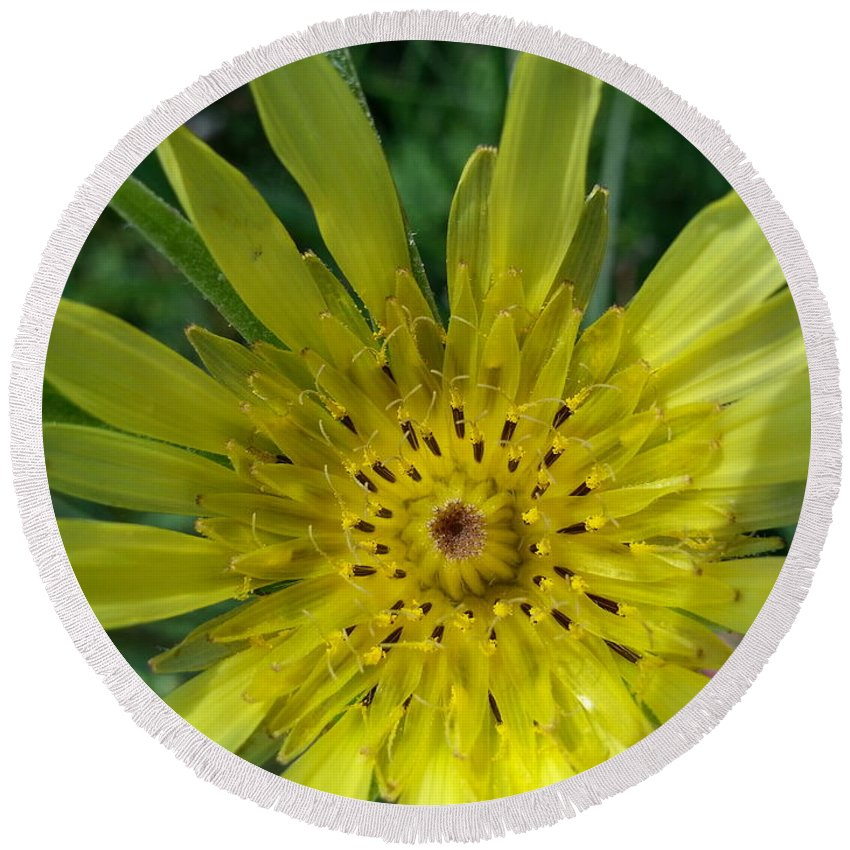Yellow Round Beach Towel featuring the photograph Too Pretty To Be A Weed by Caryl J Bohn