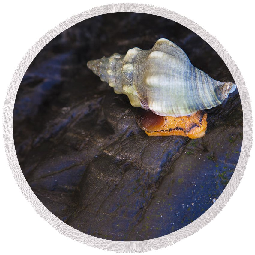 Traveling At A Snails Pace Round Beach Towel featuring the photograph Traveling At A Snail's Pace by David Millenheft