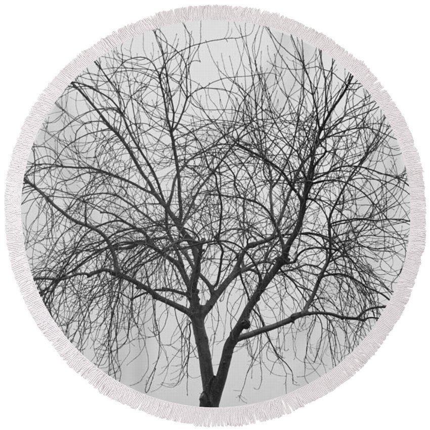 Tree Round Beach Towel featuring the photograph Tree Abstract In Black And White by James BO Insogna