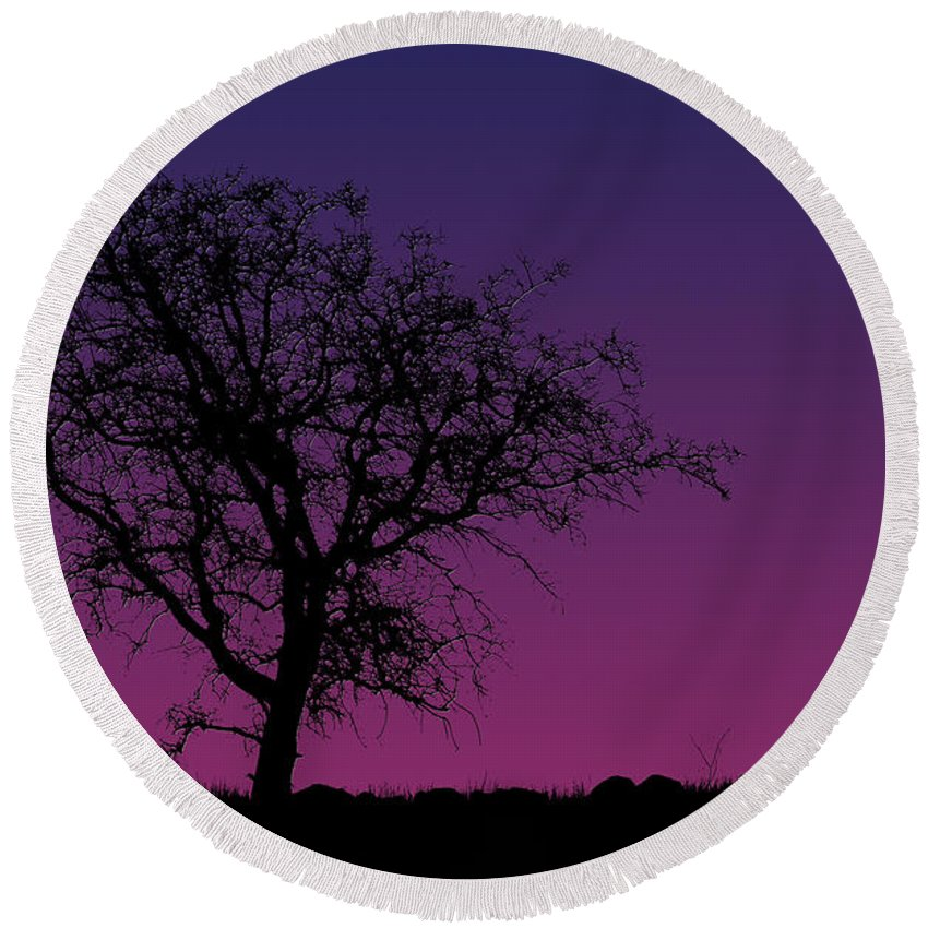 Tree Round Beach Towel featuring the photograph Tree And Coyote by Robert Woodward