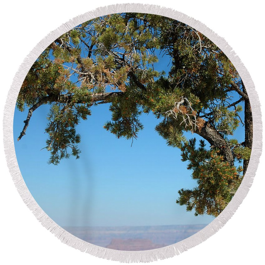 Tree Round Beach Towel featuring the photograph Tree Arch by Leticia Latocki