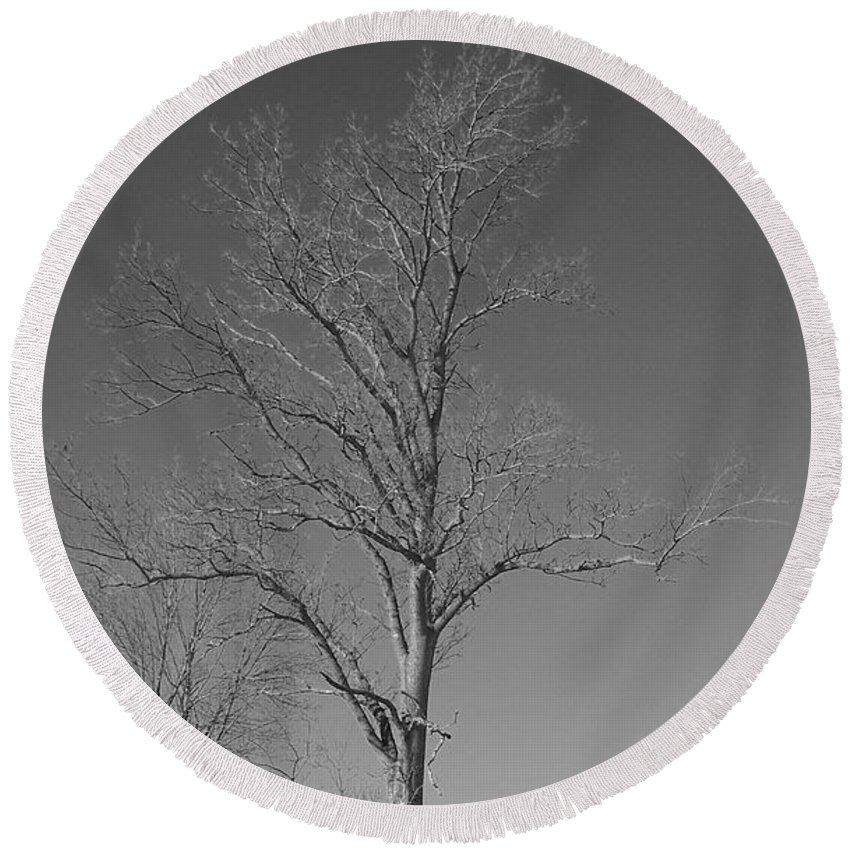 Tree Round Beach Towel featuring the photograph Tree In Winter by Michelle Miron-Rebbe