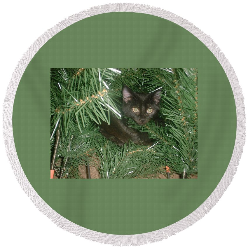 Kitten Round Beach Towel featuring the photograph Tree Kitten by Bonfire Photography