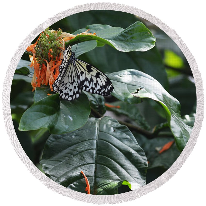 Tree Nymph Round Beach Towel featuring the photograph Tree Nymph On Blossom by Linda Kerkau