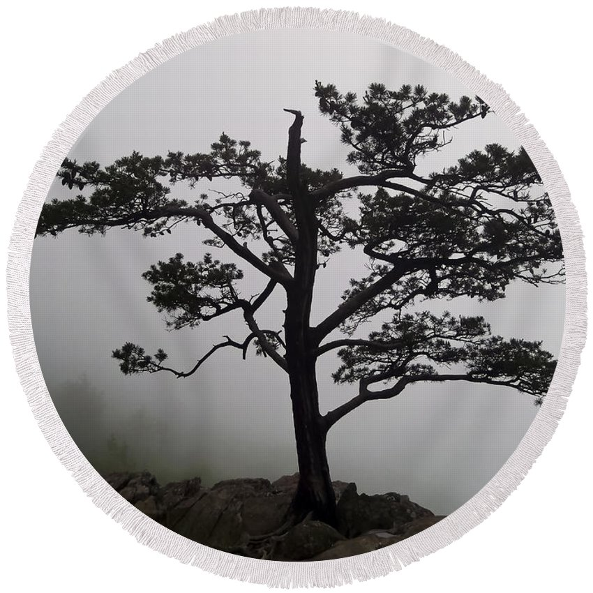 Blue Ridge Parkway Round Beach Towel featuring the photograph Tree On The Blue Ridge Parkway by Greg Reed