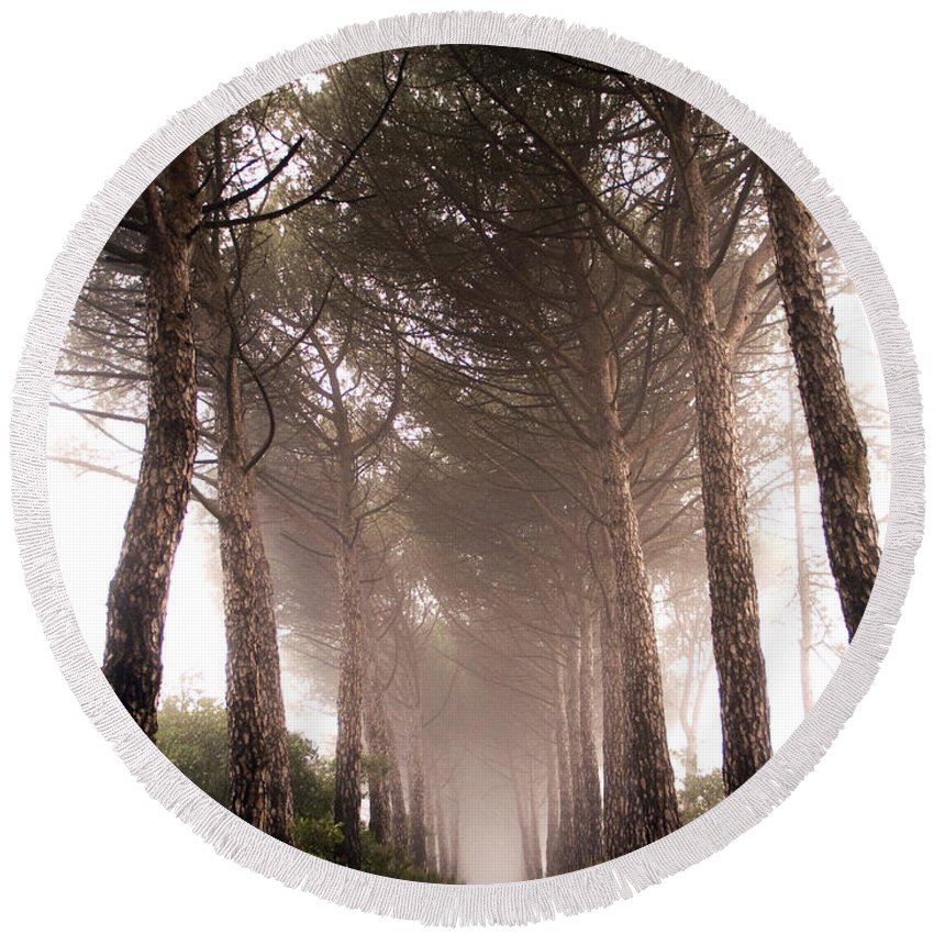 Plant Round Beach Towel featuring the photograph Trees And Mist by Tim Holt