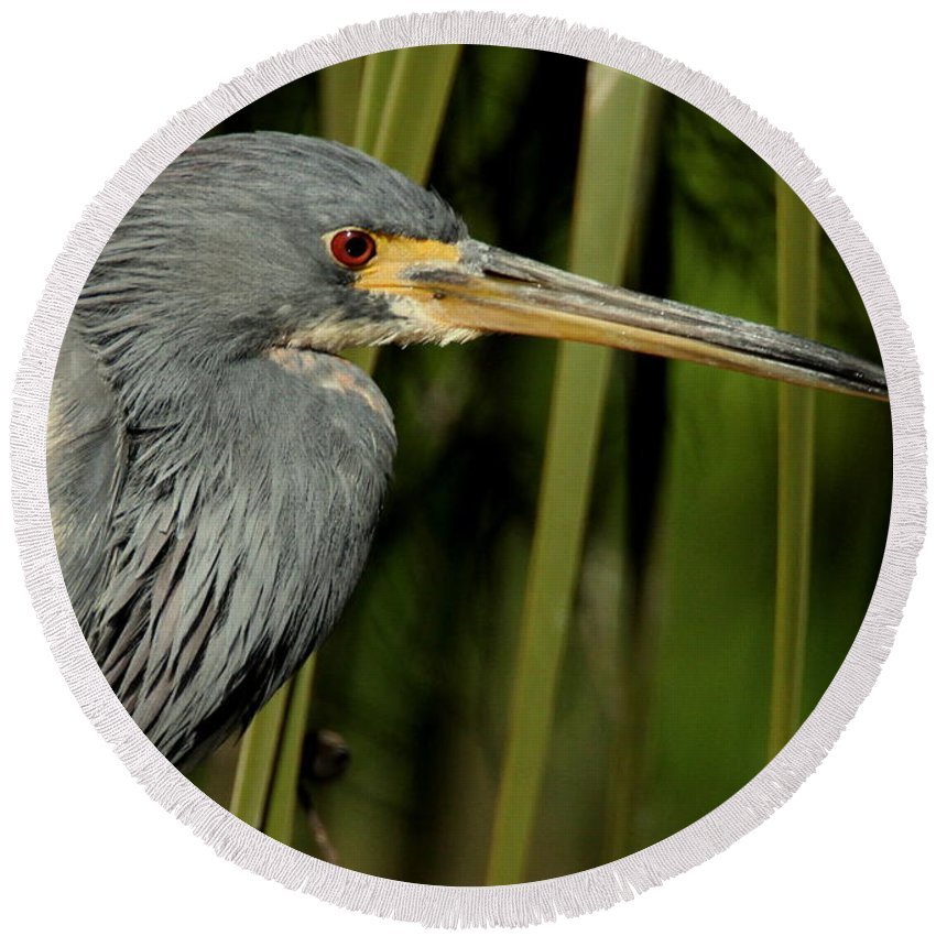 Herons Round Beach Towel featuring the photograph Tri-colored Heron by Myrna Bradshaw