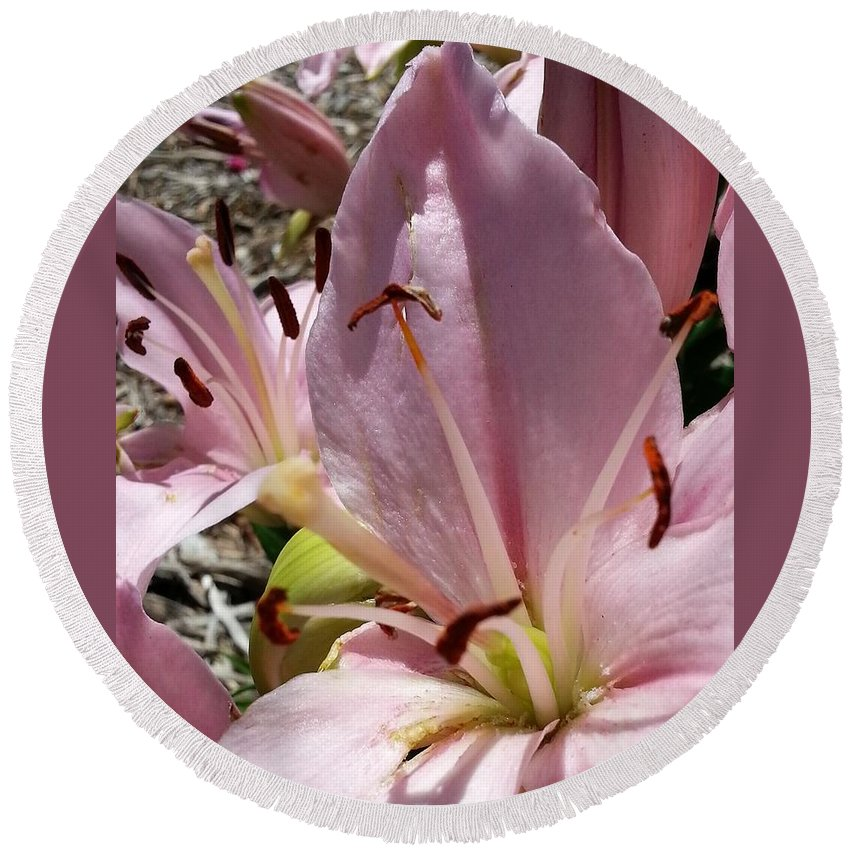 Pink Round Beach Towel featuring the photograph Tri Pink Lily by Caryl J Bohn