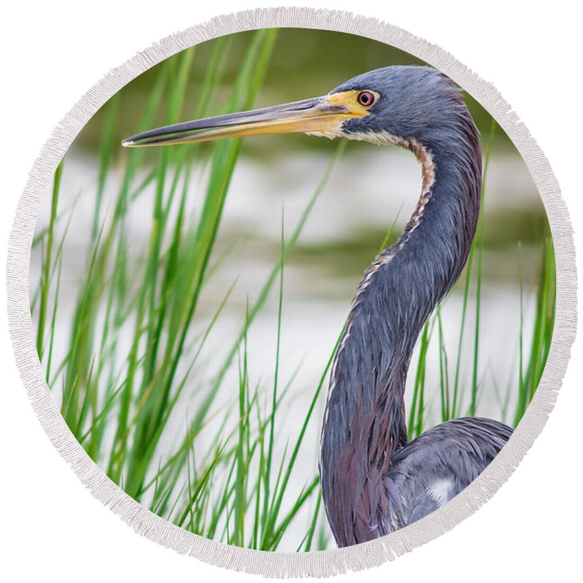 Animal Round Beach Towel featuring the photograph Tricolored Heron by Robert Frederick
