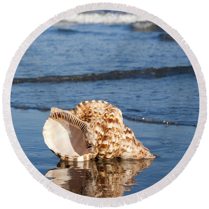 Triton Round Beach Towel featuring the photograph Triton Seashell by Anthony Totah