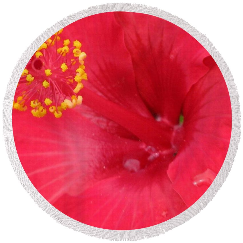 Hibiscus Round Beach Towel featuring the photograph Tropical Hibiscus - Trinidad Wind 01 by Pamela Critchlow