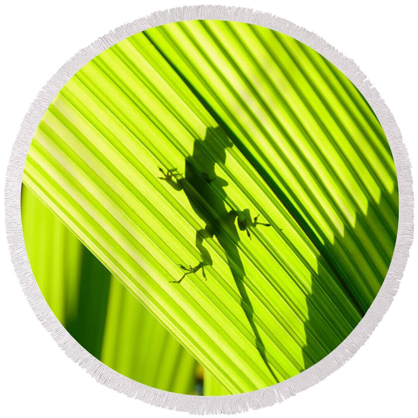 Lizard Round Beach Towel featuring the photograph Tropical Living by David Lee Thompson